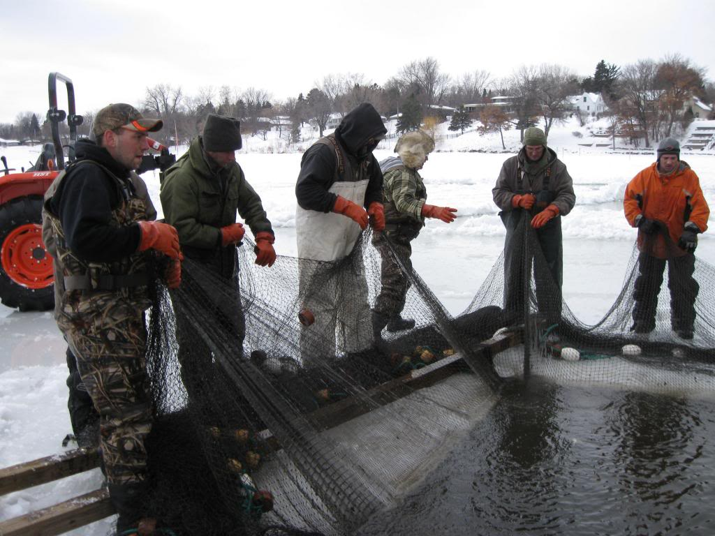 Men netting carp in a frozen lake.